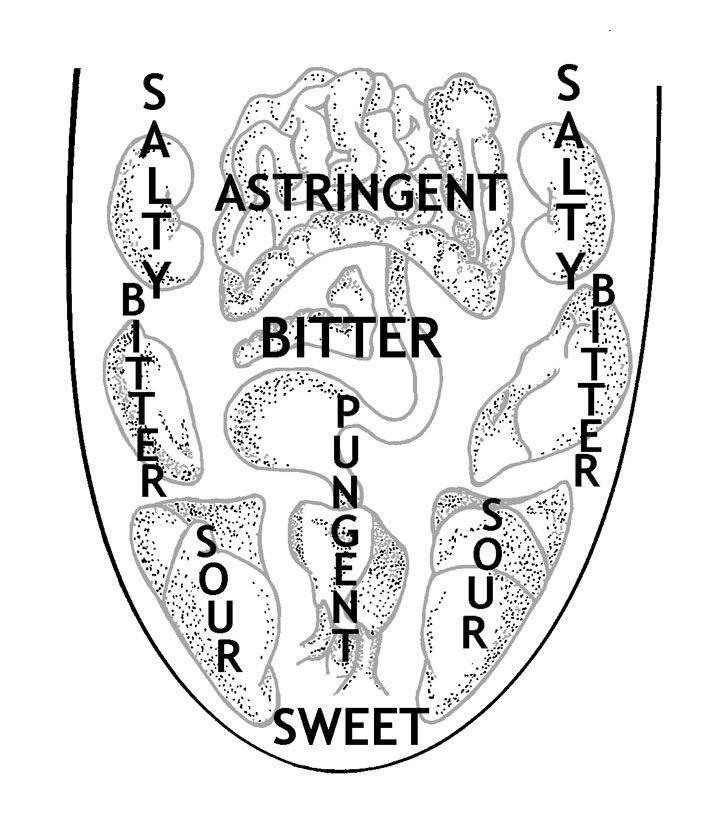 Los 6 sabores, los órganos y la lengua